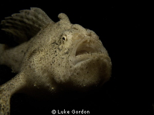 Anyone guess what happened when a poor cardinal fish swam... by Luke Gordon 